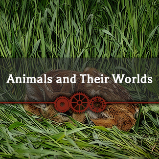 Animals and Their Worlds - Purchase Individual Items